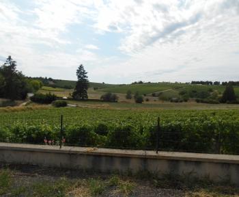 Location Maison 4 pièces Sancerre (18300) - Vue sur vigne